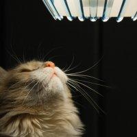 Кот и свет :: Юрий Груздев
