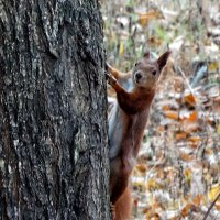 Из жизни лесных белок Фото №2 :: Владимир Бровко