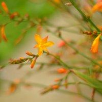 цветы :: Nina sofronova