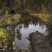 дороги лесные :: Владимир