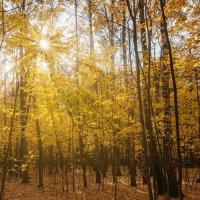 Осеннее солнце :: Надежда Лаптева