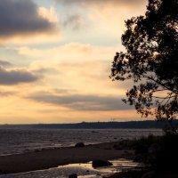 Вечерний залив :: Aнна Зарубина