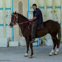 Араб и его друг :: Shmual Hava Retro