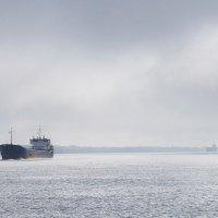 На Дунае в районе Вилково :: Алексей Логинов