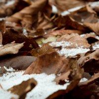 Под снег... :: Владимир Синицын
