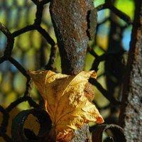 Осенний лист :: Цветков Виктор Васильевич