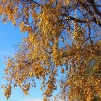 Осенние краски \\серия\\ :: Николай Сапегин