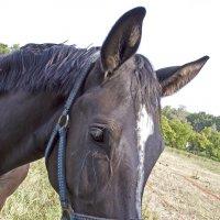 Портрет коняшки :: Носов Юрий
