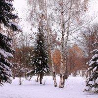 Осень на дворе, деревья в ... серебре))) :: Татьяна Ломтева