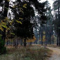 """Осень 2014.Парк """"Партизанской славы"""" Фото №2 :: Владимир Бровко"""