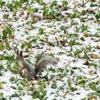 Вот и зима неожиданно пришла :: Игорь Максименко