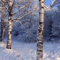 Зимние березки :: Елена Грошева