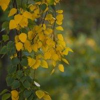 Симпатичная осень :: Ольга Винницкая (Olenka)
