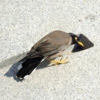 Любопытный птах :: Ирина