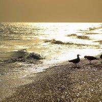 Золотое Черное море :: Анна Перова