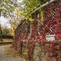 Беседка в винограде :: Сергей Шруба