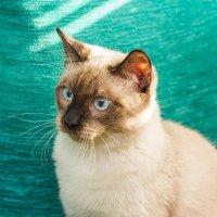 ...кот :: NюRа;-) Ковылина