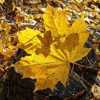 Осенние зарисовки.Свет и тень :: Лидия (naum.lidiya)