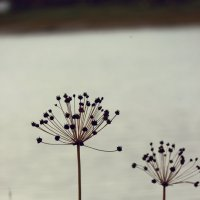 Природа :: Татьяна Новоселова