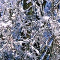 Зимняя сказка :: Viacheslav