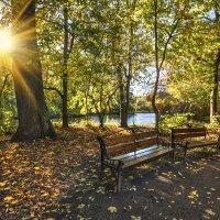 Осенний свет пробил листву... :: Лариса Шамбраева