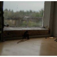 Смерть мухи :: graf70