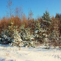 Первый снег. :: Галина .