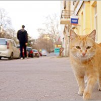 Улица полна неожиданностей... :: Кай-8 (Ярослав) Забелин