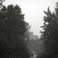 Дорога домой. :: сергей лебедев
