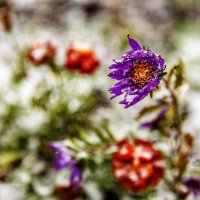 осенняя зима :: Люба Забелкина