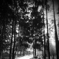 Утро в лесу. :: сергей лебедев