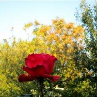 Прощание с осенью... :: Тамара (st.tamara)