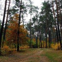"""Осень 2014 Парк """"Партизанская слава"""" Фото №6 :: Владимир Бровко"""