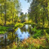 Осенний лес :: Александр Новиков