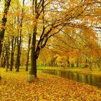 в Летнем саду...октябрь :: Михаил Жуковский