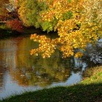 Осенняя речушка :: Владимир Гилясев