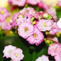 цветочки :: Ильназ Фархутдинов