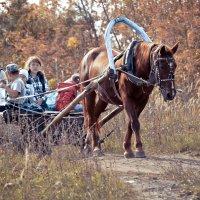 конная прогулка :: Ирина Кулагина