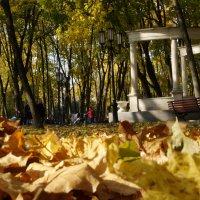 Осень в парке :: Eva ***
