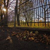 Последние солнечные дни :: Владимир Самсонов