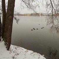 Первый снег :: Андрей Sh