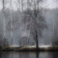 Берёзовый остров. Первый снег :: Юрий Цыплятников