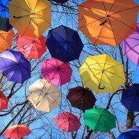 Зонтики в парке Фельдмана :: Алексей Гончаров