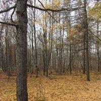 Изучаю новое для меня место в парке - IMG_3482 :: Андрей Лукьянов