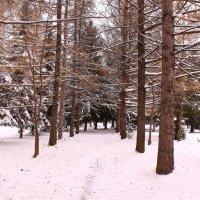 Прогуляемся по осеннему парку :: Татьяна Ломтева