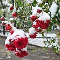 Просто наступила зима :: Степан Карачко