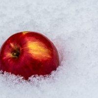 Яблоко на снегу... :: Светлана