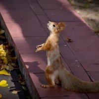 А за кедровые орешки я еще и не так попозирую! :: Евгений Лимонтов