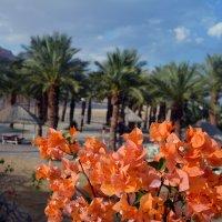 Цветы Иудейской пустыни :: Валерий Баранчиков