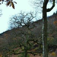Причудливые деревья. :: zoja